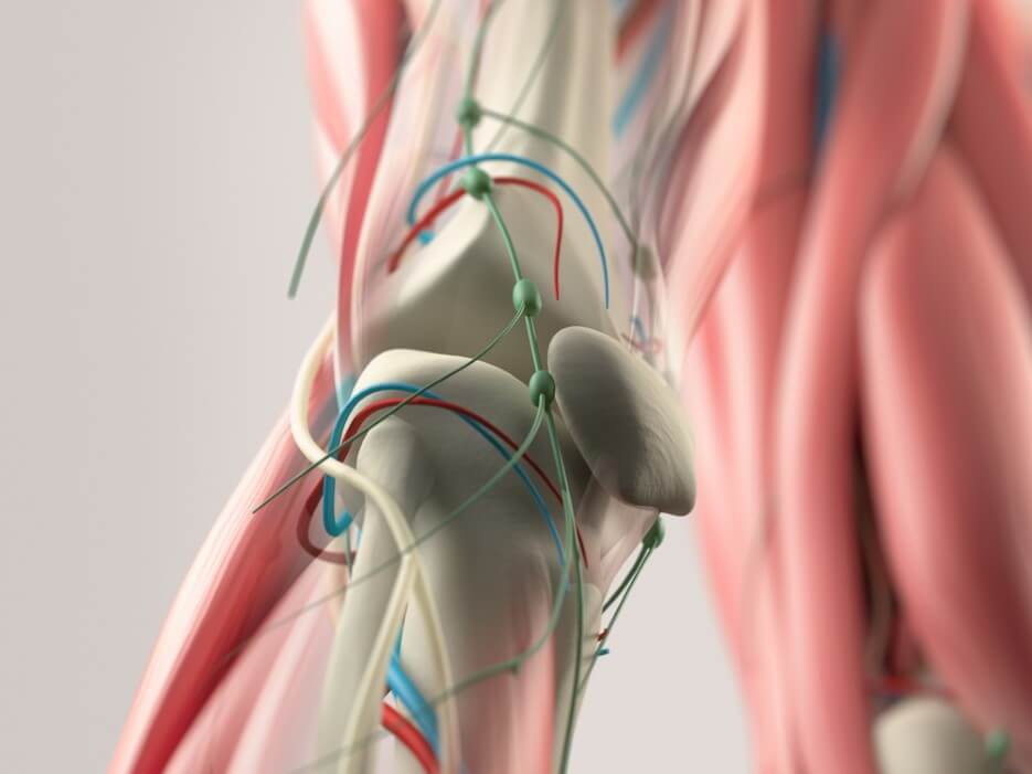 Human anatomy detail of knee
