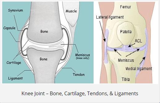 Joint Illustration