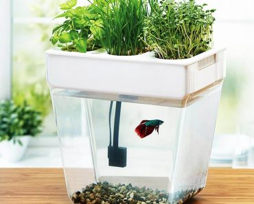 The Ultimate Blueprint For Aquaponics Review: Your Clean Food?