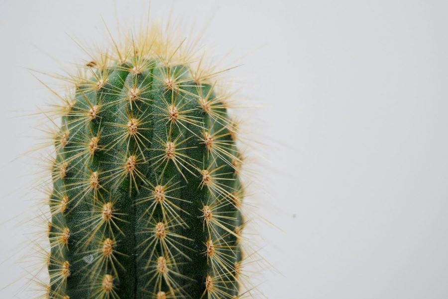 cactus-2262495_1920