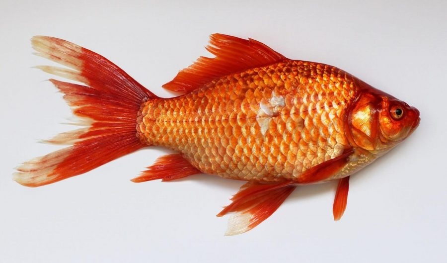 Fishy Smell