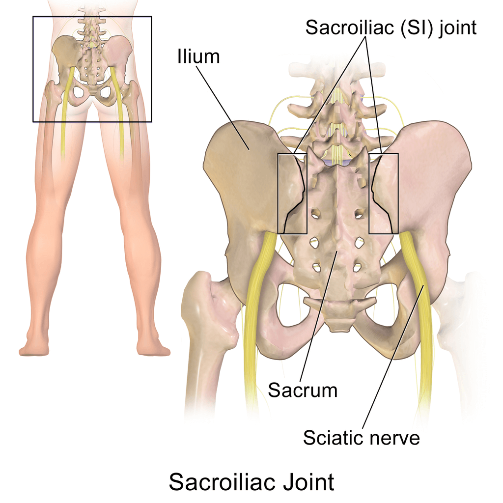 The sciatic nerves diagram