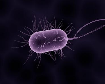 Antibiotic Epidemic Review: What Is The Harm Antibiotics Cause?