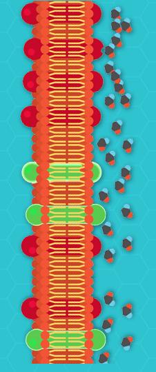 Adrenoreceptors